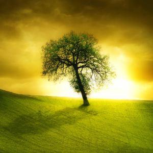 holytree